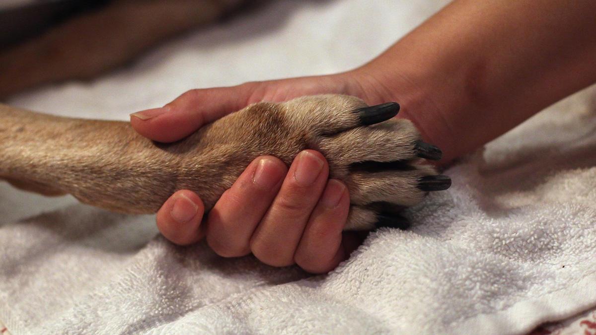 Кремация домашних животных